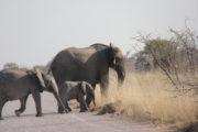 Elefanti03