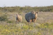 Rinoceronti04
