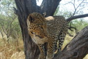 Leopardi02